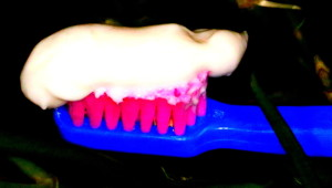 pasta dp zębów
